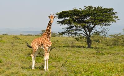 ケニアで海外ボランティア・インターンシップ 到着案内