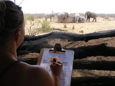アフリカで環境保護の海外ボランティア ボツワナの自然保護区でゾウの生態調査
