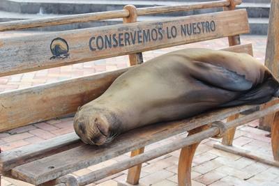ガラパゴス諸島で見られるアザラシ