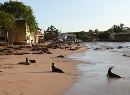 プロジェクトアブロードでガラパゴス諸島のボランティア活動に参加しよう!