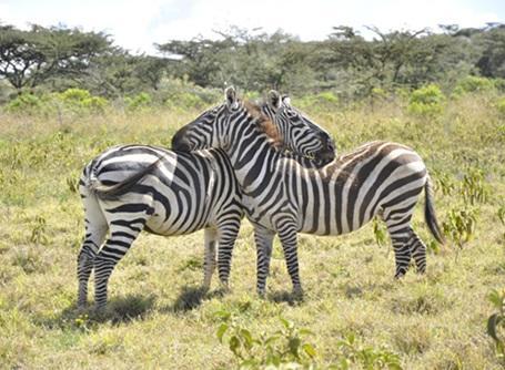 プロジェクトアブロードでケニアのボランティア活動に参加しよう!