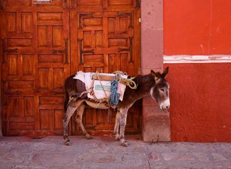 プロジェクトアブロードでメキシコのボランティア活動に参加しよう!