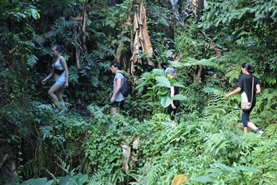 休日にサモアの熱帯雨林を探検するボランティアたち