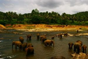 スリランカ、水中の像
