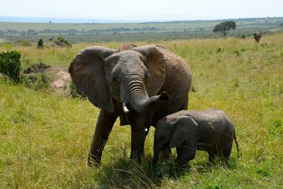 Two elephants at a national park in Tanzania, Africa.