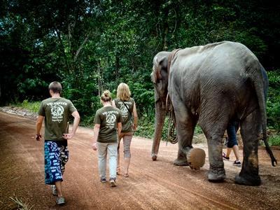 ゾウと一緒に歩くタイのボランティアたち