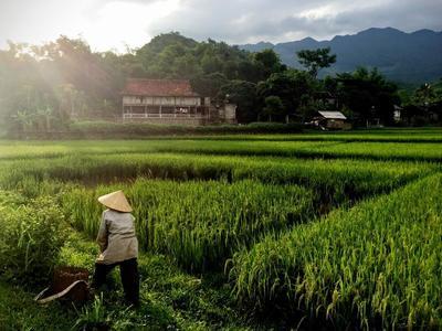 プロジェクトアブロードでベトナムのボランティア活動に参加しよう!