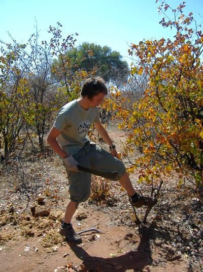 アフリカで環境の保護活動に取り組むプロジェクトアブロードのボランティア