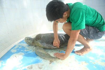メキシコで環境保護に貢献する日本人ボランティア