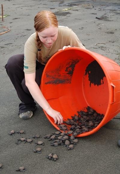 メキシコのビーチでウミガメの保護活動をするボランティア