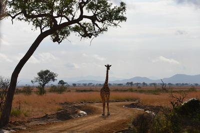 東アフリカのタンザニアで海外ボランティア 豊かな自然が広がるタンザニア