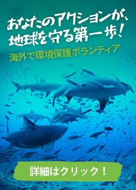 環境保護活動に貢献する海外ボランティア