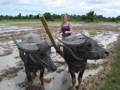 カンボジアで伝統的な耕作に励むクメール文化体験ボランティア