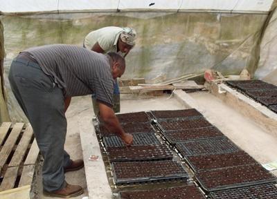 ジャマイカで海外農業ボランティア