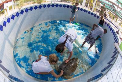 春休みを利用した大学生・短大生の短期海外ボランティア メキシコでカメと水槽の清掃にあたる環境保護ボランティアたち