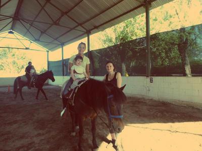 南米アルゼンチンで乗馬セラピーの海外ボランティア
