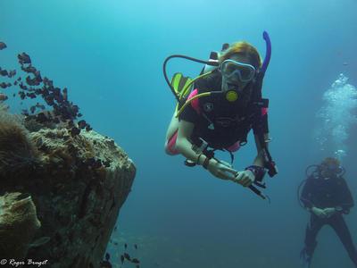 カンボジアで海外ボランティア ダイビングをしながら海洋調査