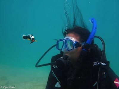 カンボジアで海洋保護ボランティア ダイビング調査中の海の様子