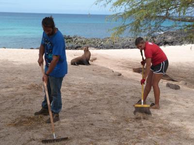 エクアドル、ガラパゴス諸島、ビーチを清掃する環境保護ボランティア