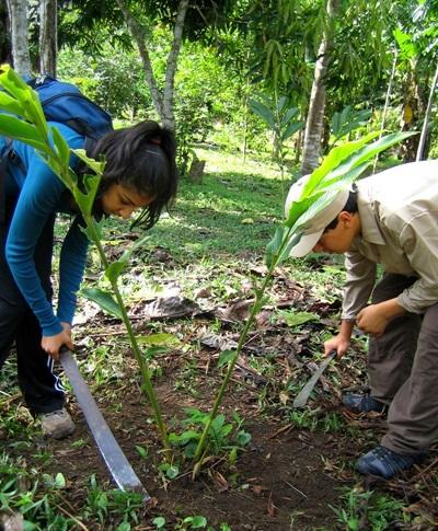 南米のペルーで環境保護の海外ボランティア活動 モデルファーム