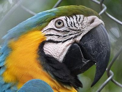 南米ペルーで環境保護の海外ボランティア