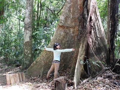 ペルーアマゾンの巨大な木と環境保護ボランティア