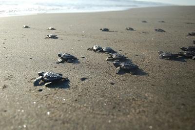 環境保護プロジェクト、浜辺のウミガメ館