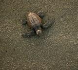 メキシコ、環境保護プロジェクト、プロジェクトアブロードボランティアの集めたウミガメのデータ