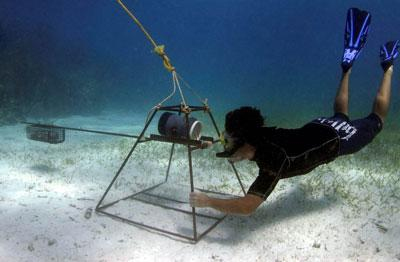 フィジーのサメ生態保護ボランティアが、ダイビングをしながら海洋調査をしている様子