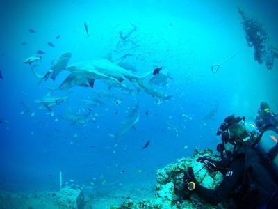 フィジーでダイビングをしながら海洋保護に貢献する海外ボランティア