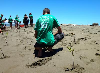フィジーでマングローブの植林活動に貢献する環境保護ボランティアたち