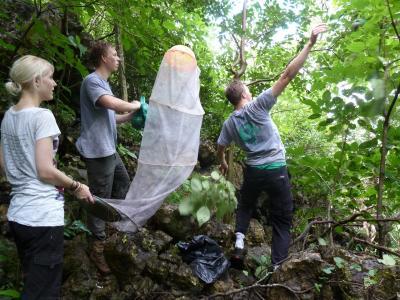 コスタリカ、環境保護プロジェクト、蝶々を保護するプロジェクトアブロードボランティア
