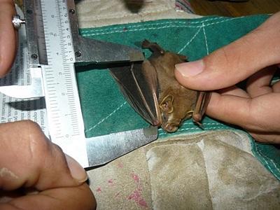 コスタリカ、環境保護プロジェクト、カエルに関して勉強するプロジェクトアブロードボランティア
