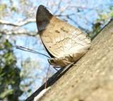 コスタリカ、環境保護プロジェクト、野鳥の調査リスト