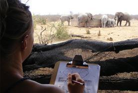 アフリカ南部サバンナ保護