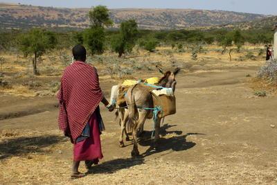 タンザニアで村落開発プロジェクト マサイ族の生活