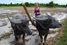 クメール文化コミュニティープロジェクトでユニークなカンボジアの動物と一緒のプロジェクトアブロードボランティア