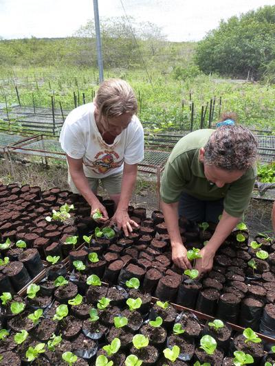 エクアドルで環境保護&コミュニティ 植林に取り組むシニアボランティア