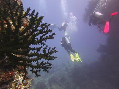 シニア環境保護プロジェクト フィジーの海での調査ダイビング中の様子