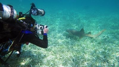 ベリーズのサンゴ礁保護区でサメの調査をするダイバー
