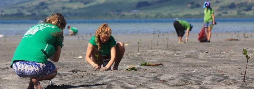 高校生の短期海外ボランティアプログラム 環境保護活動