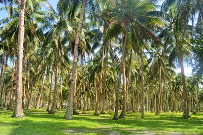 フィリピンで海外ボランティアをしながら現地の自然を楽しもう