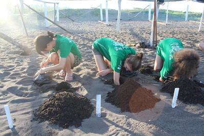 メキシコで環境保護 ウミガメの卵を孵化場に設置する日本人高校生ボランティアと仲間たち