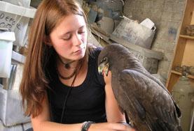 動物医療プロジェクトで鳥を世話するインターン