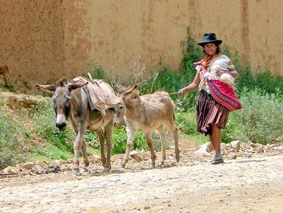 A Bolivian woman walks alongside her pair of donkeys