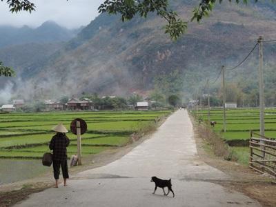 ベトナムの美しい田園風景