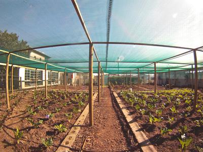 南アフリカで栄養管理の海外インターンシップ 野菜農園造り