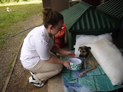 中米ベリーズで国際ボランティア 捨て犬のケアにあたるアニマルケアボランティア