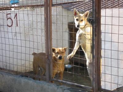 ルーマニア、動物ケアプロジェクト、犬の世話をするプロジェクトアブロードボランティア