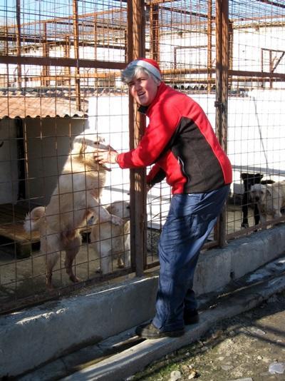 ルーマニア、犬の世話をするプロジェクトアブロードボランティア